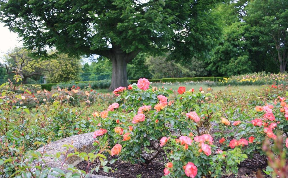 roses_Fotor