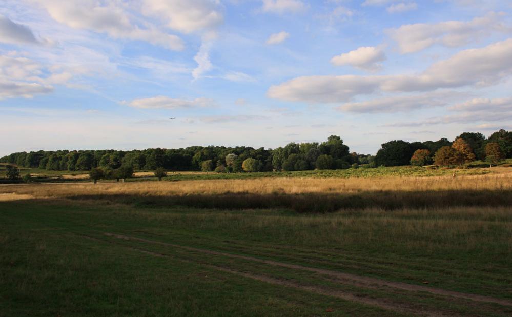 Richmond PArk 8