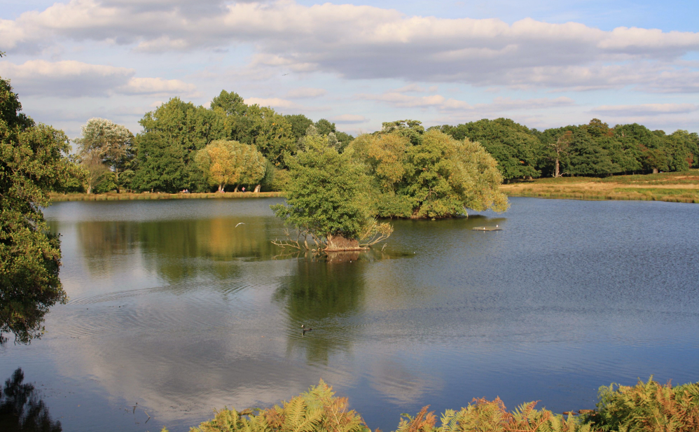 Richmond Park 5