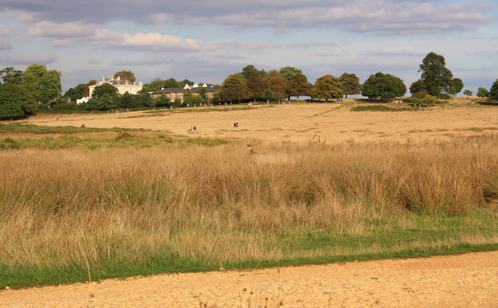 Richmond Park 7