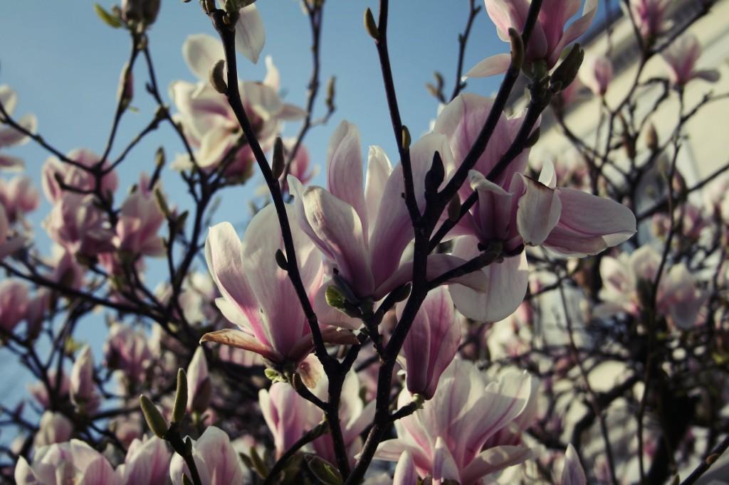 Le printemps à Londres