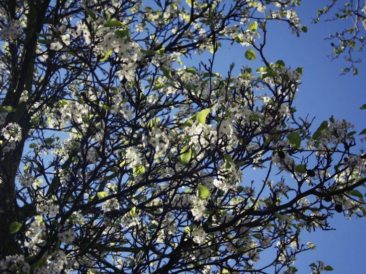 printemps a Londres