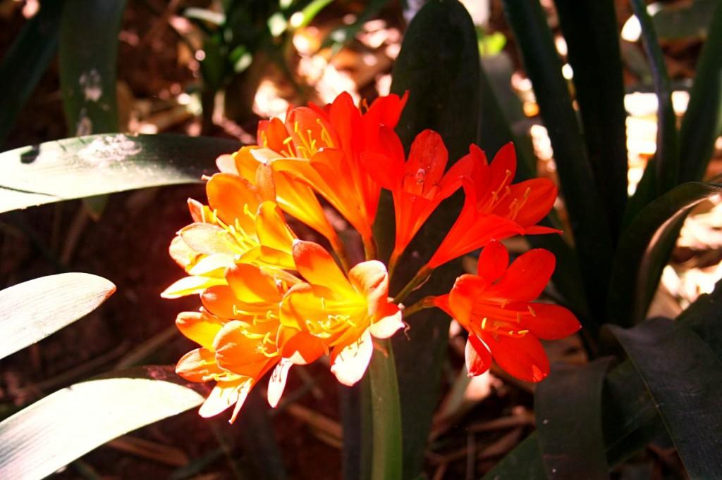 Fleur jardin de majorelle