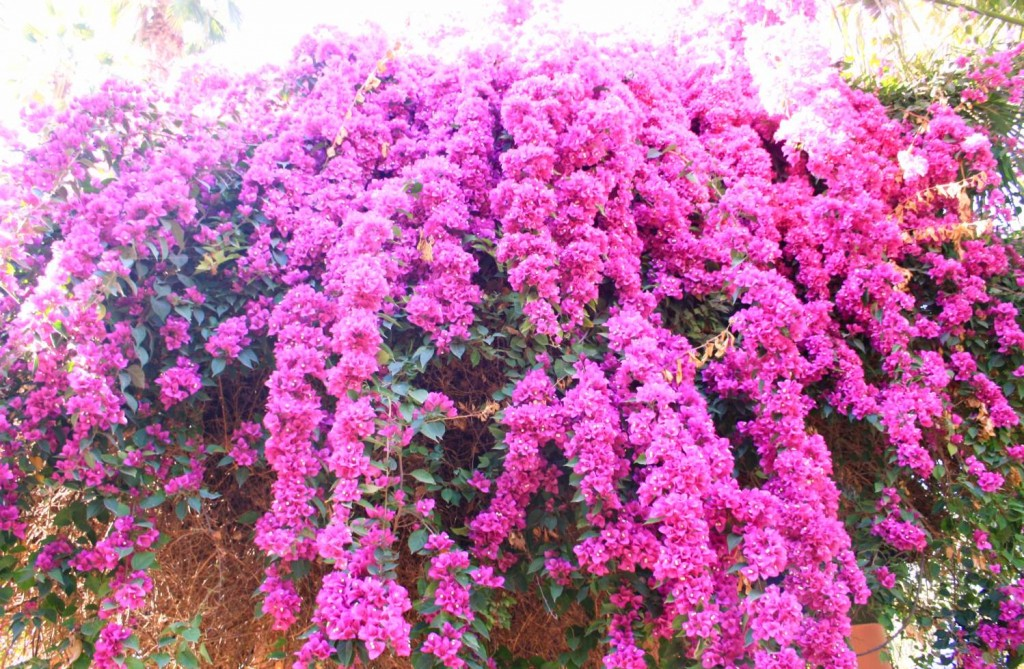 Fleurs jardins de majorelle 2