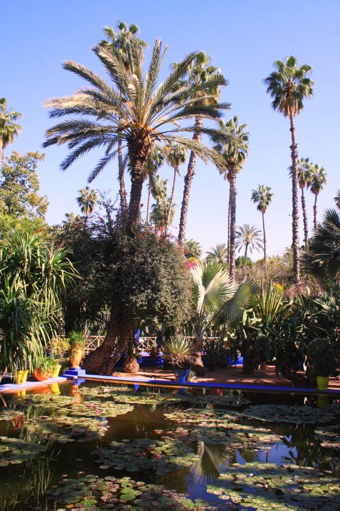 Majorelle palmiers