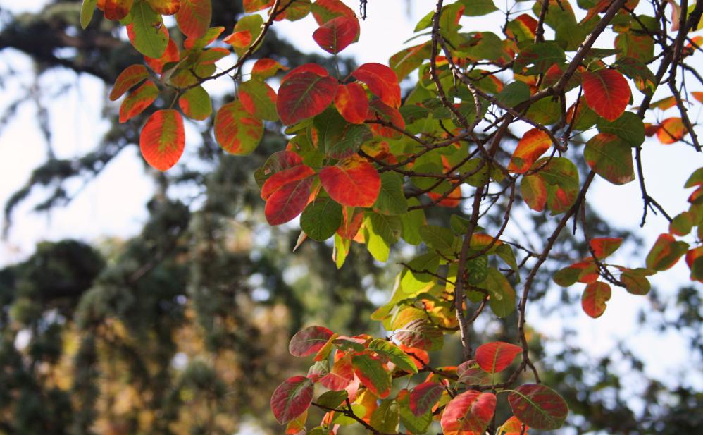 Mont Gellért feuilles d'automne