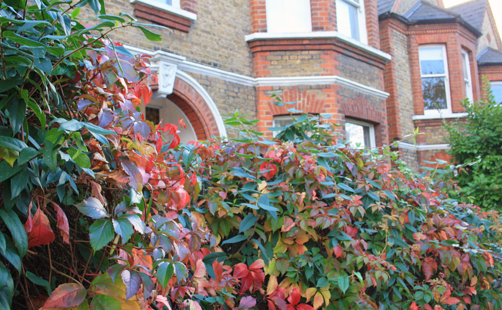 Clapham automne 2