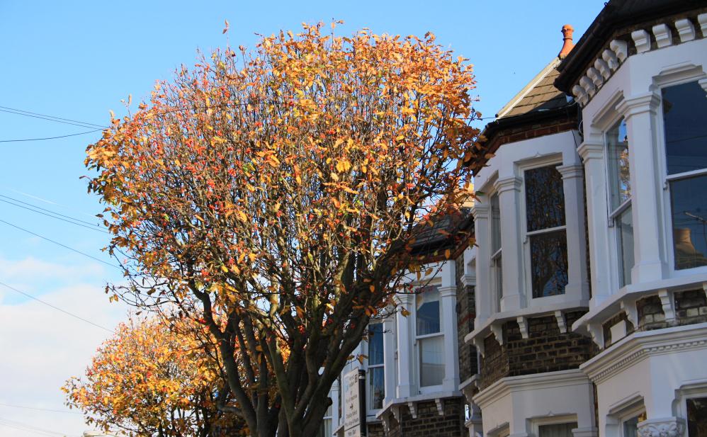 Clapham automne 4