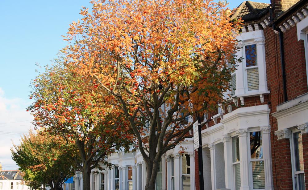 Clapham automne 5