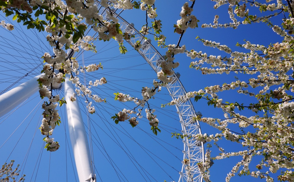 Bourgeons London Eye 1