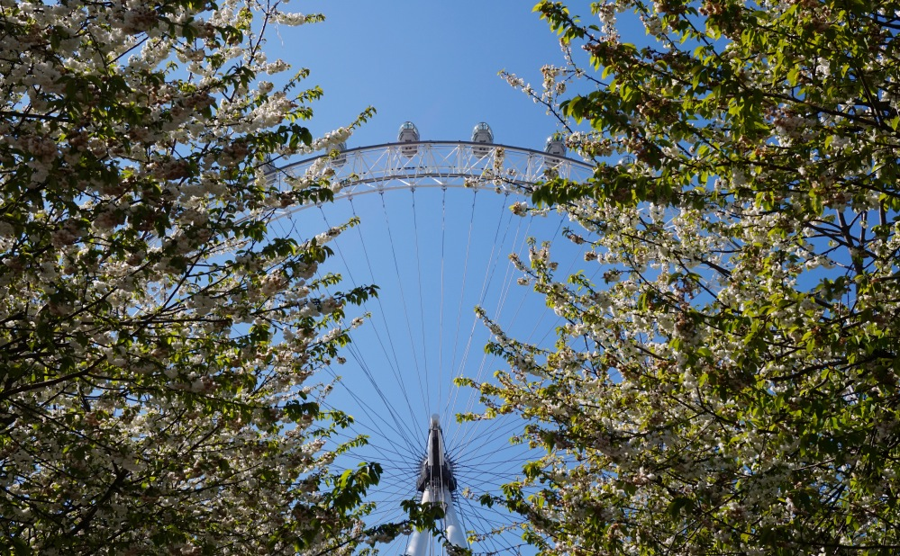 Bourgeons London Eye 2