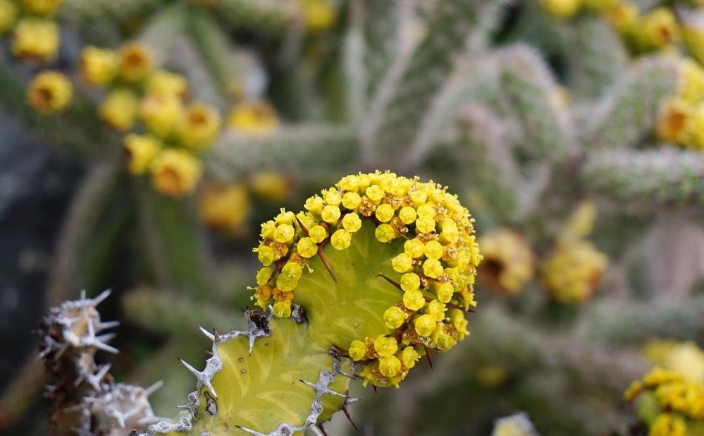 Cactus zoom 2
