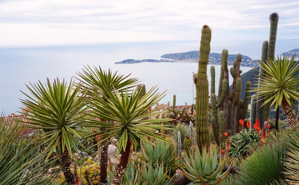 Eze jardin exotique Cactus