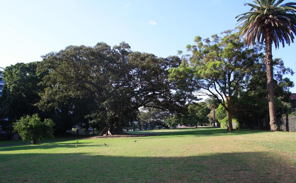 2 semaines à Sydney_Botanical Gardens 4