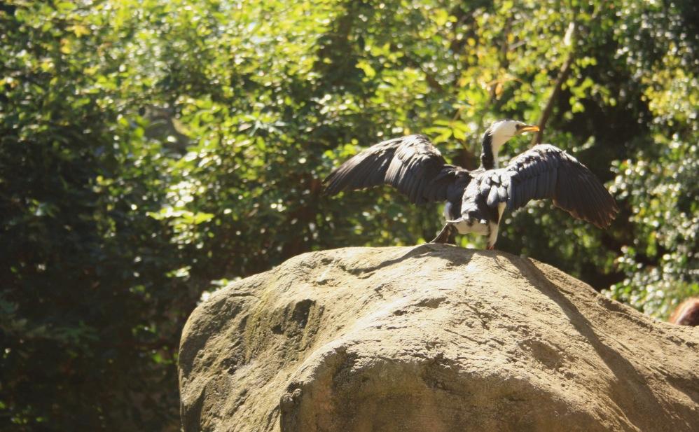 2 semaines à Sydney_Taronga Zoo 4