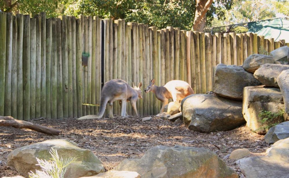 2 semaines à Sydney_Taronga Zoo 6