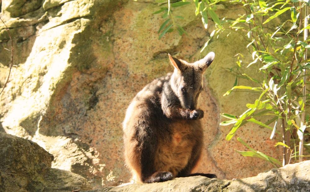 2 semaines à Sydney_Taronga Zoo3