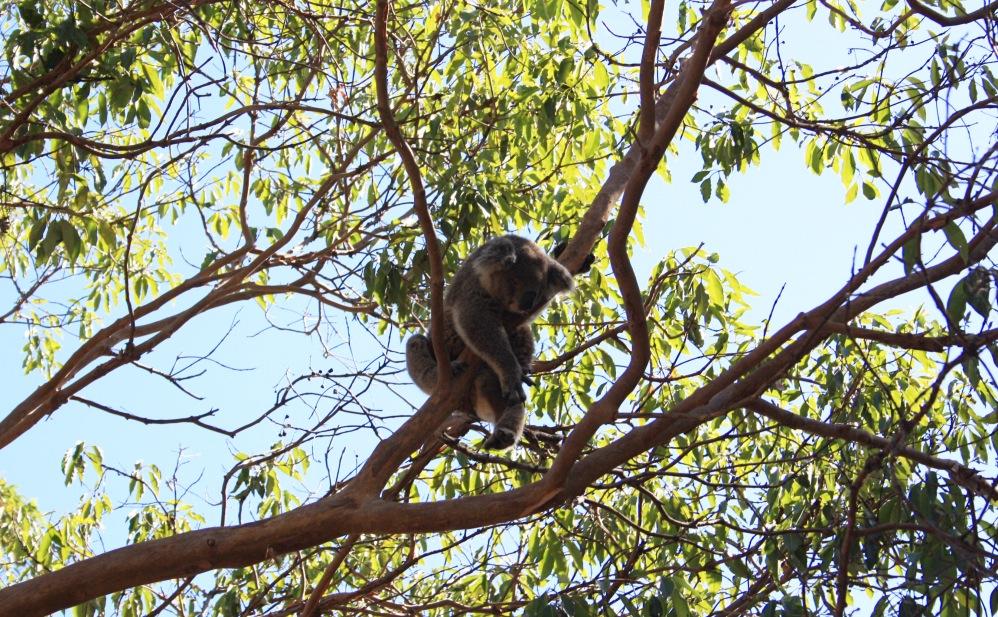 2 semaines à Sydney_Taronga Zoo7