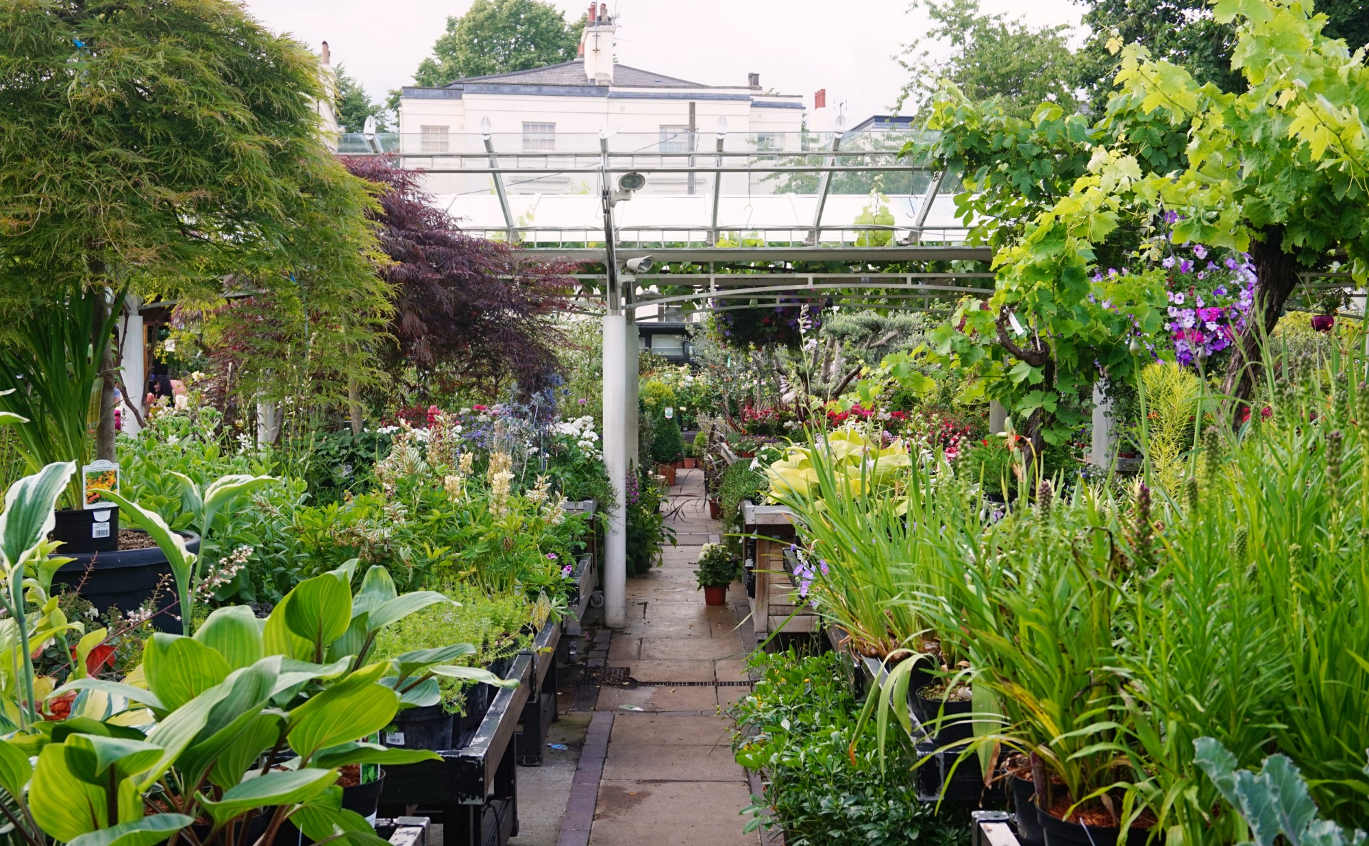 Clifton Nurseries_20