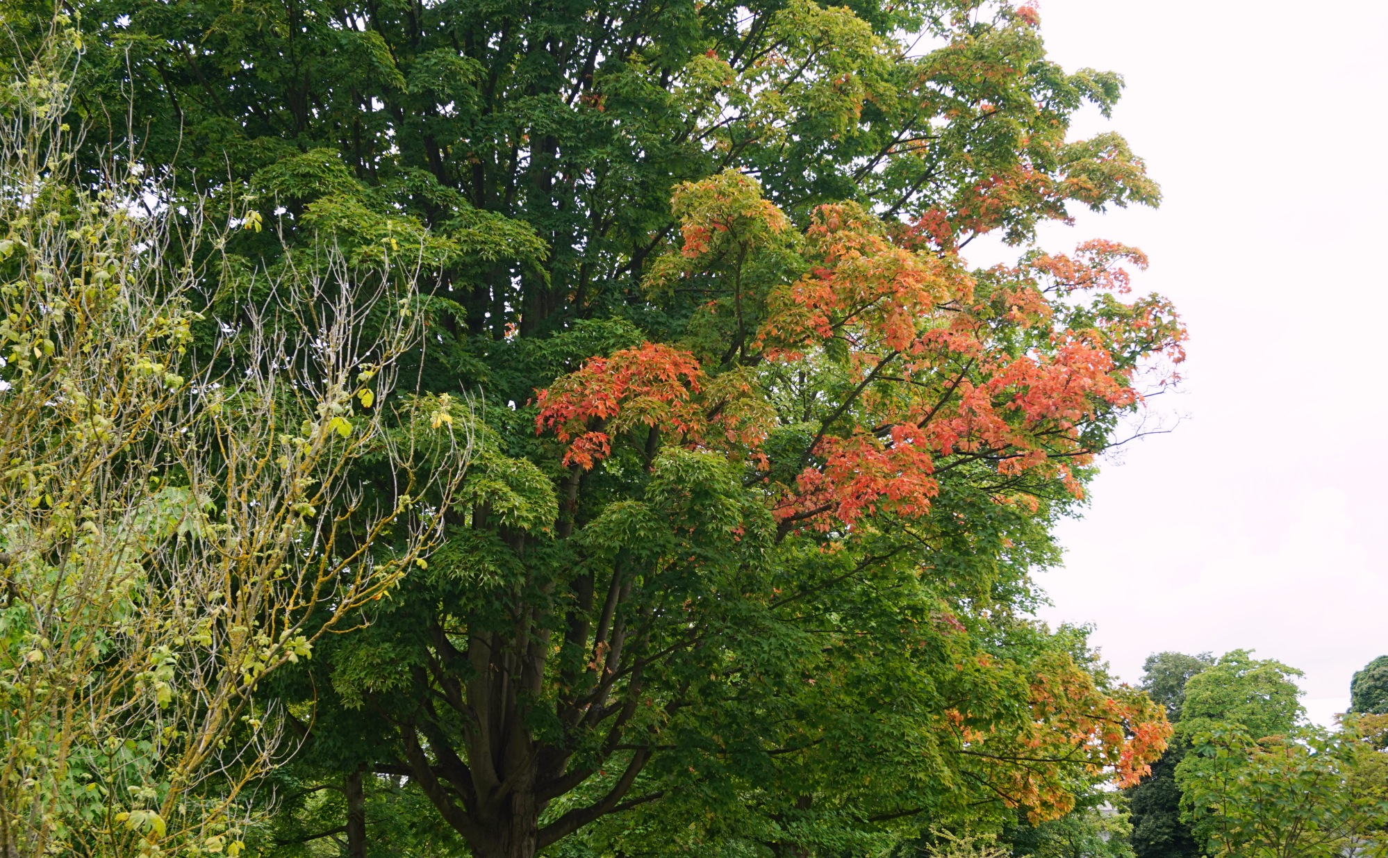Visiter-Kew-Gardens-1