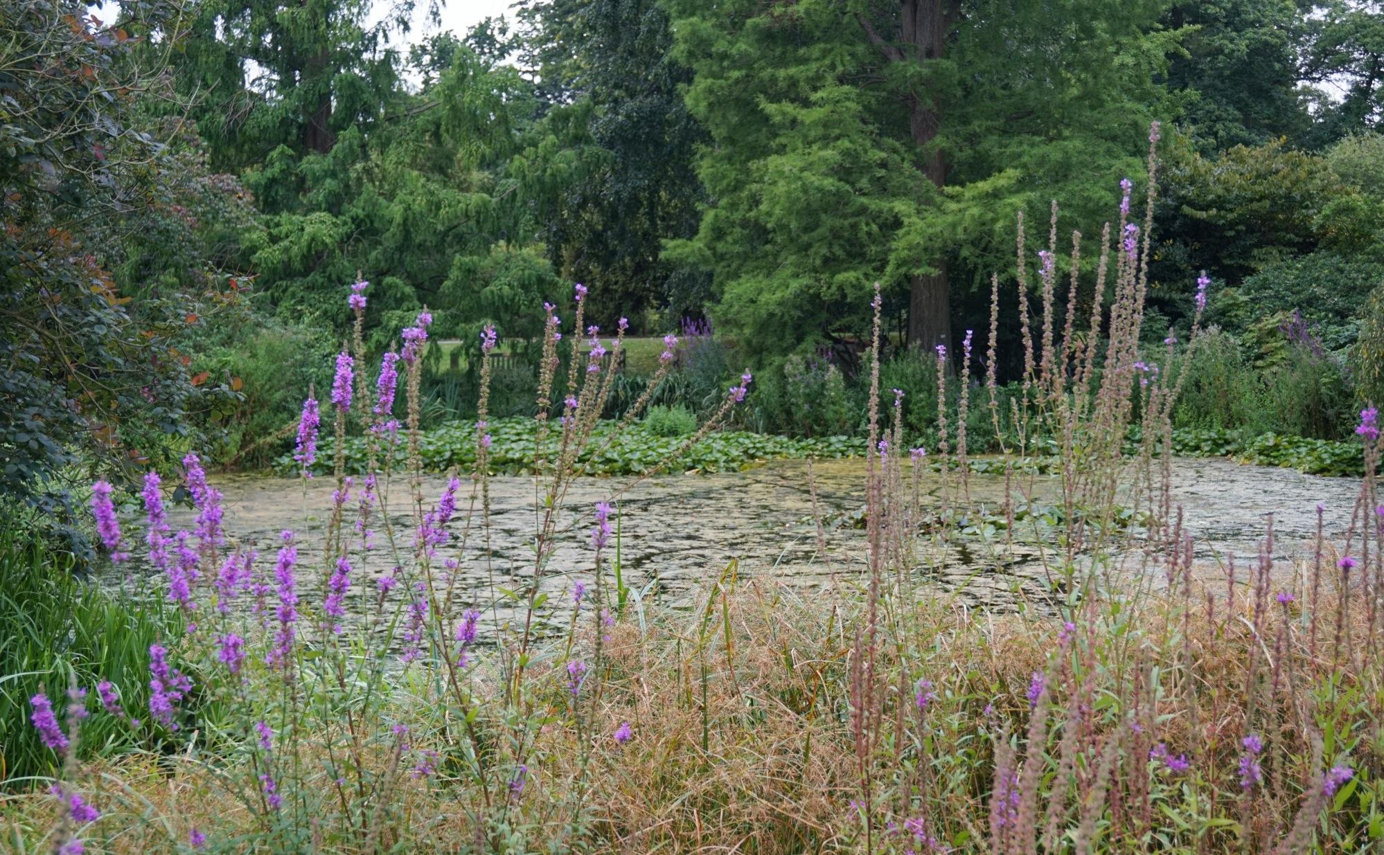 Visiter-Kew-Gardens-11