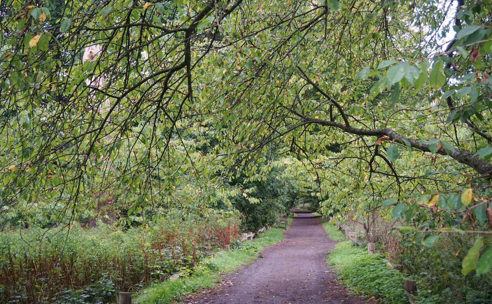 Visiter-Kew-Gardens-13