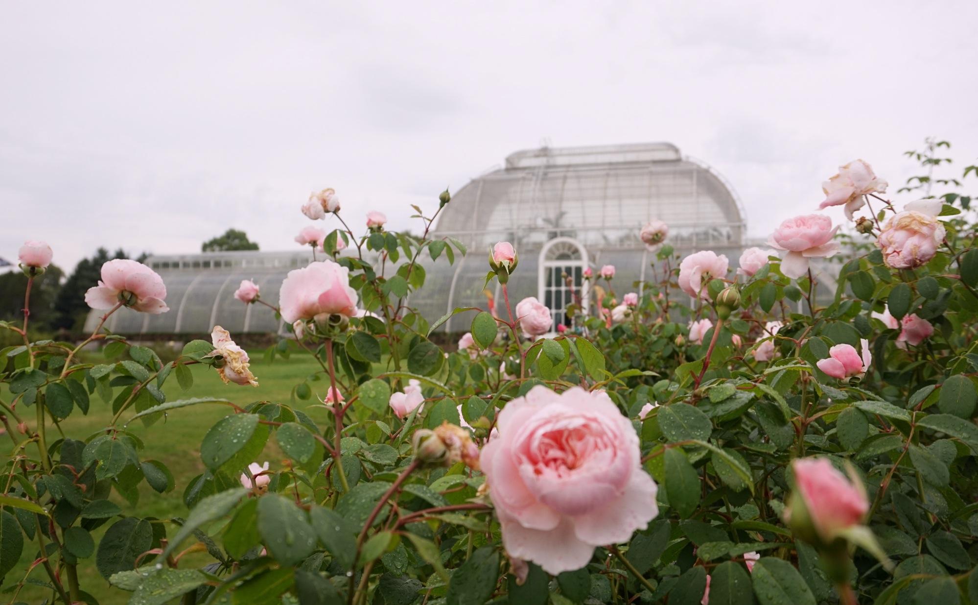 Visiter-Kew-Gardens-18