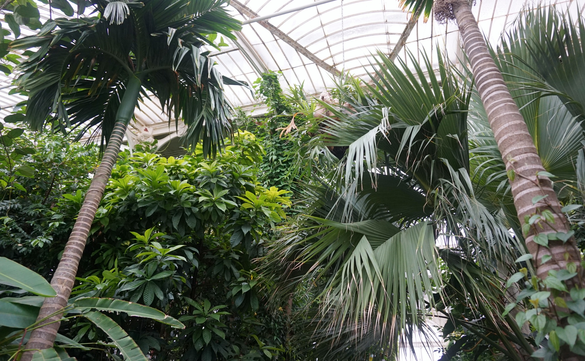 Visiter-Kew-Gardens-19