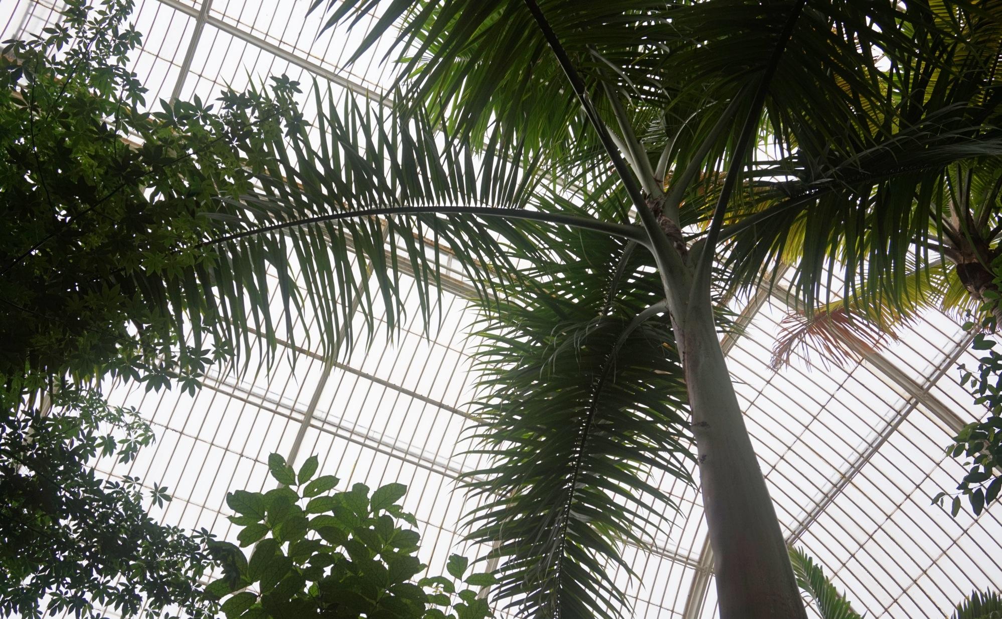 Visiter-Kew-Gardens-20