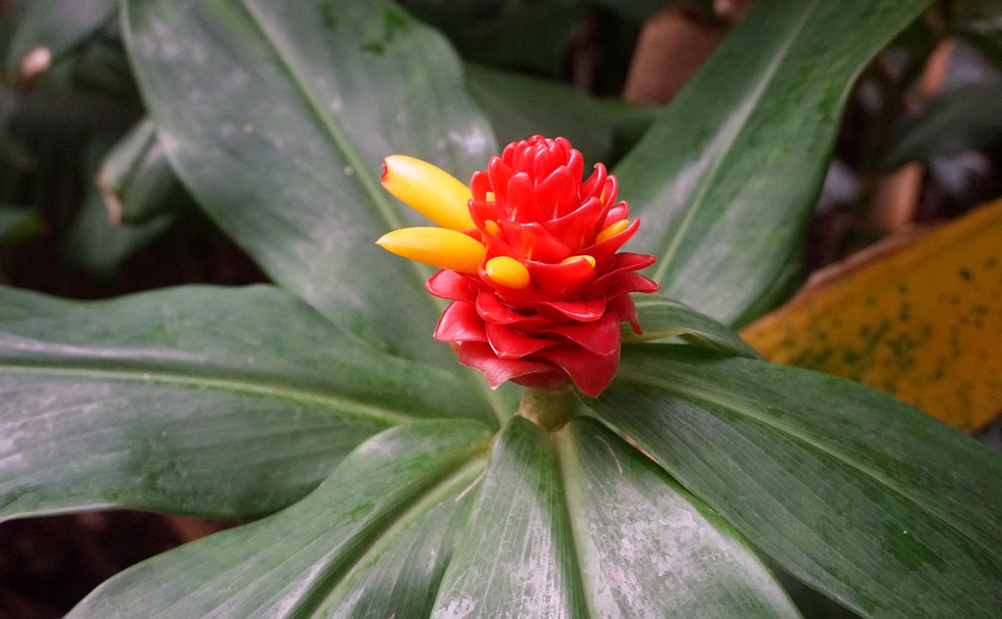 Visiter-Kew-Gardens-22