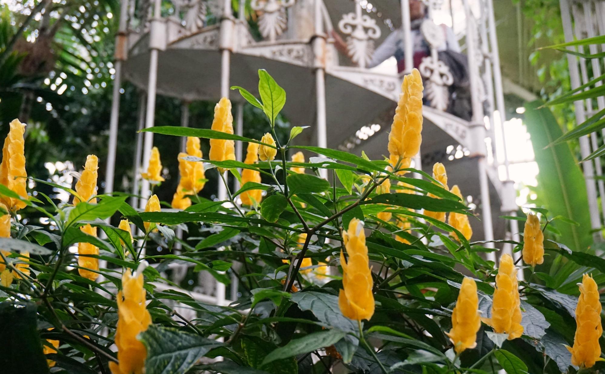 Visiter-Kew-Gardens-23