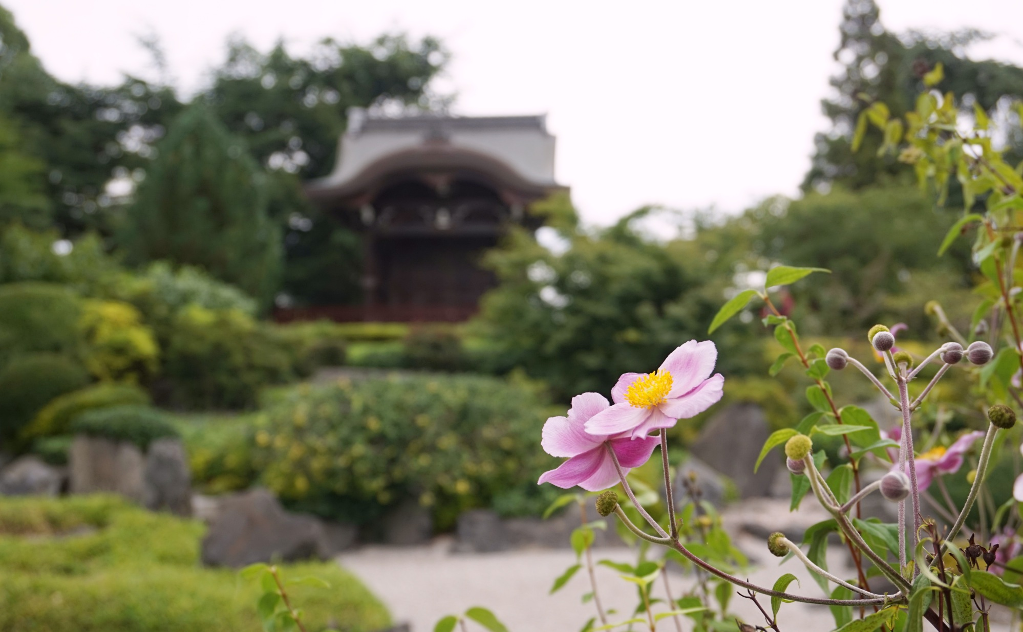 Visiter-Kew-Gardens-3