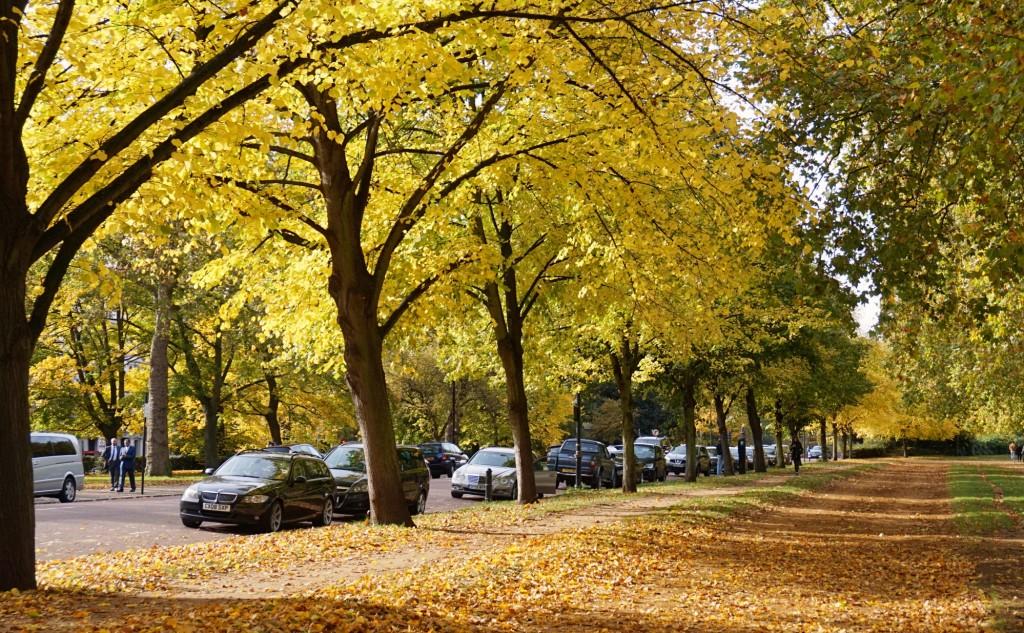 Balade-Automne-Hyde-Park-4