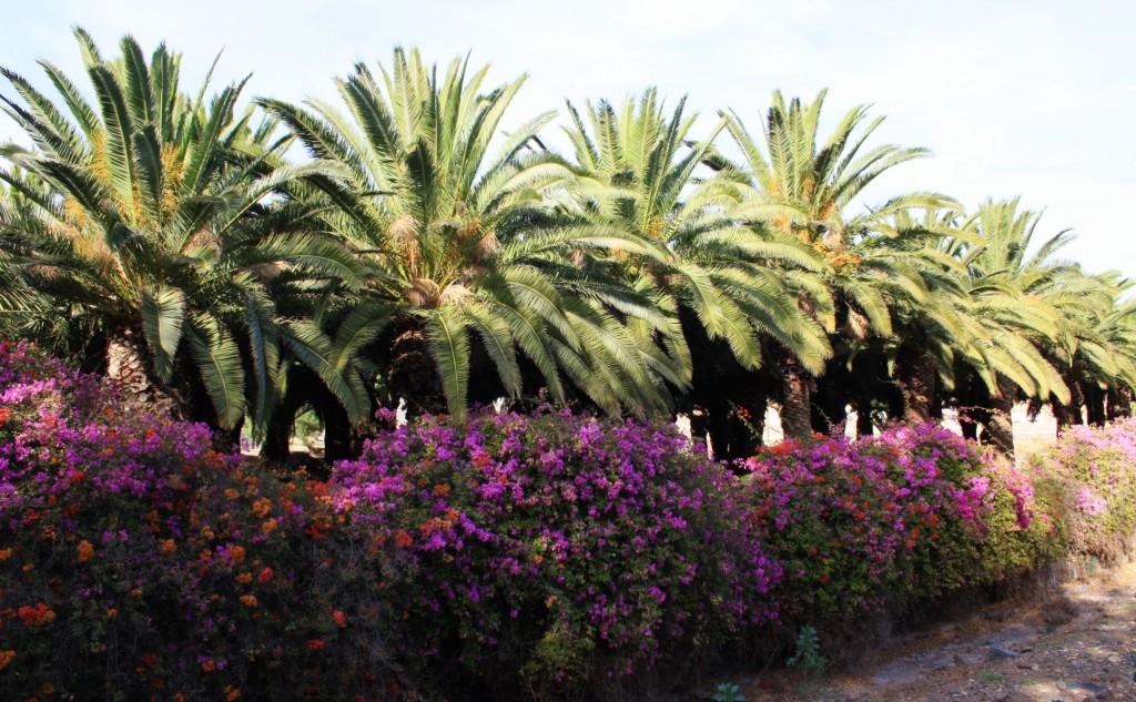 Noel-au-soleil-Fuerteventura-Pajara