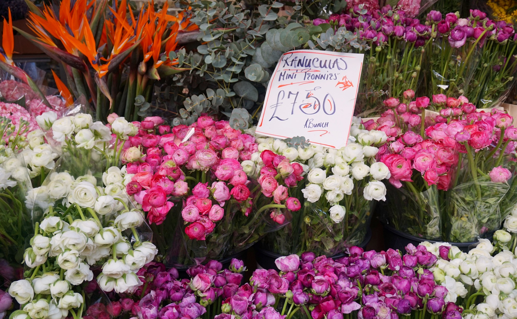 Balade-Columbia-Road-Flower-Market-12