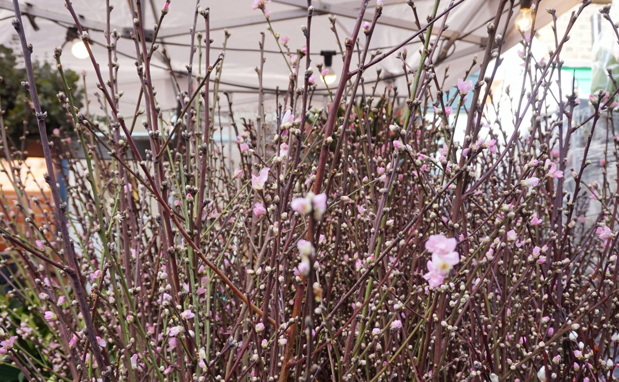 Balade-Columbia-Road-Flower-Market-13