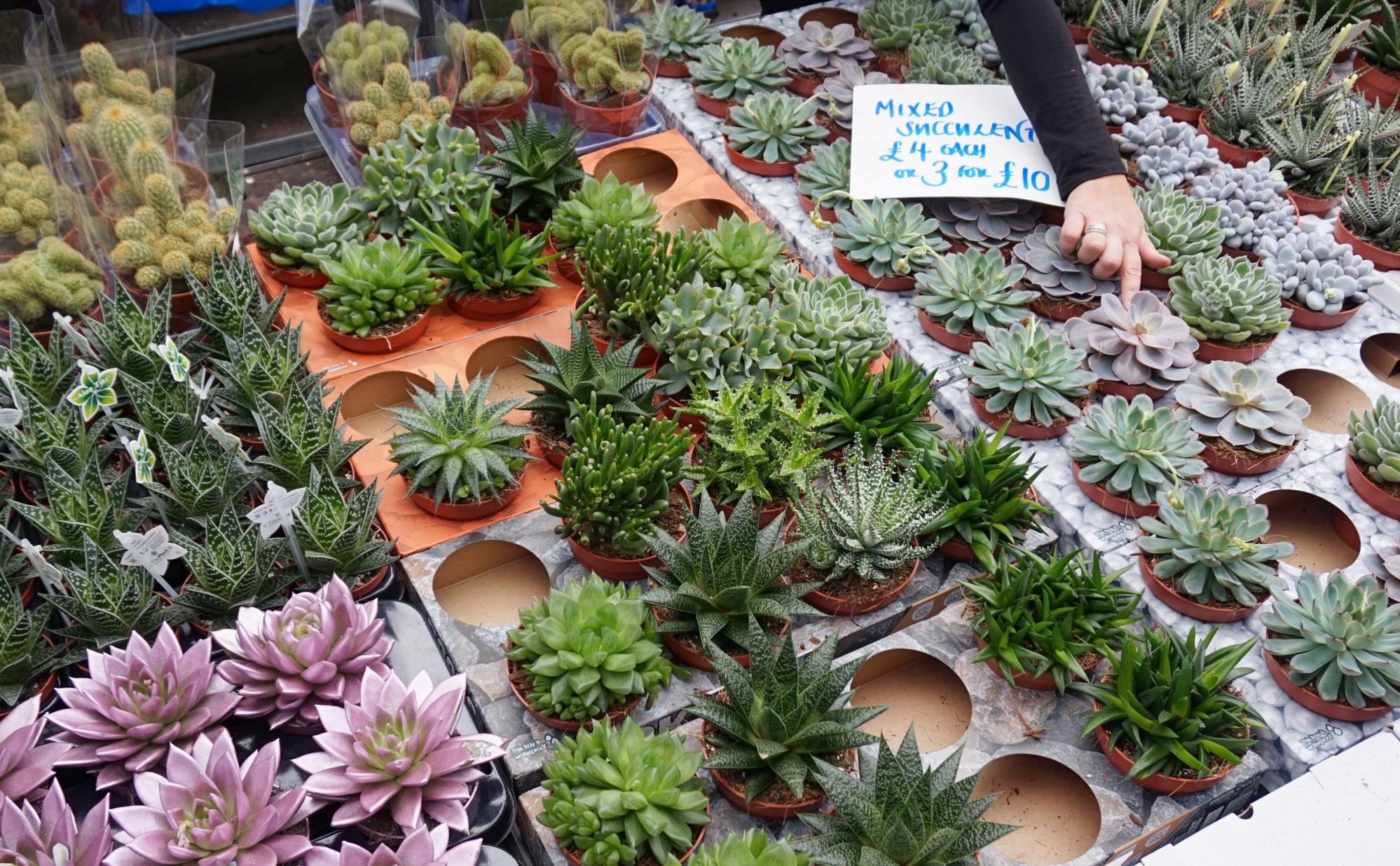 Balade-Columbia-Road-Flower-Market-7