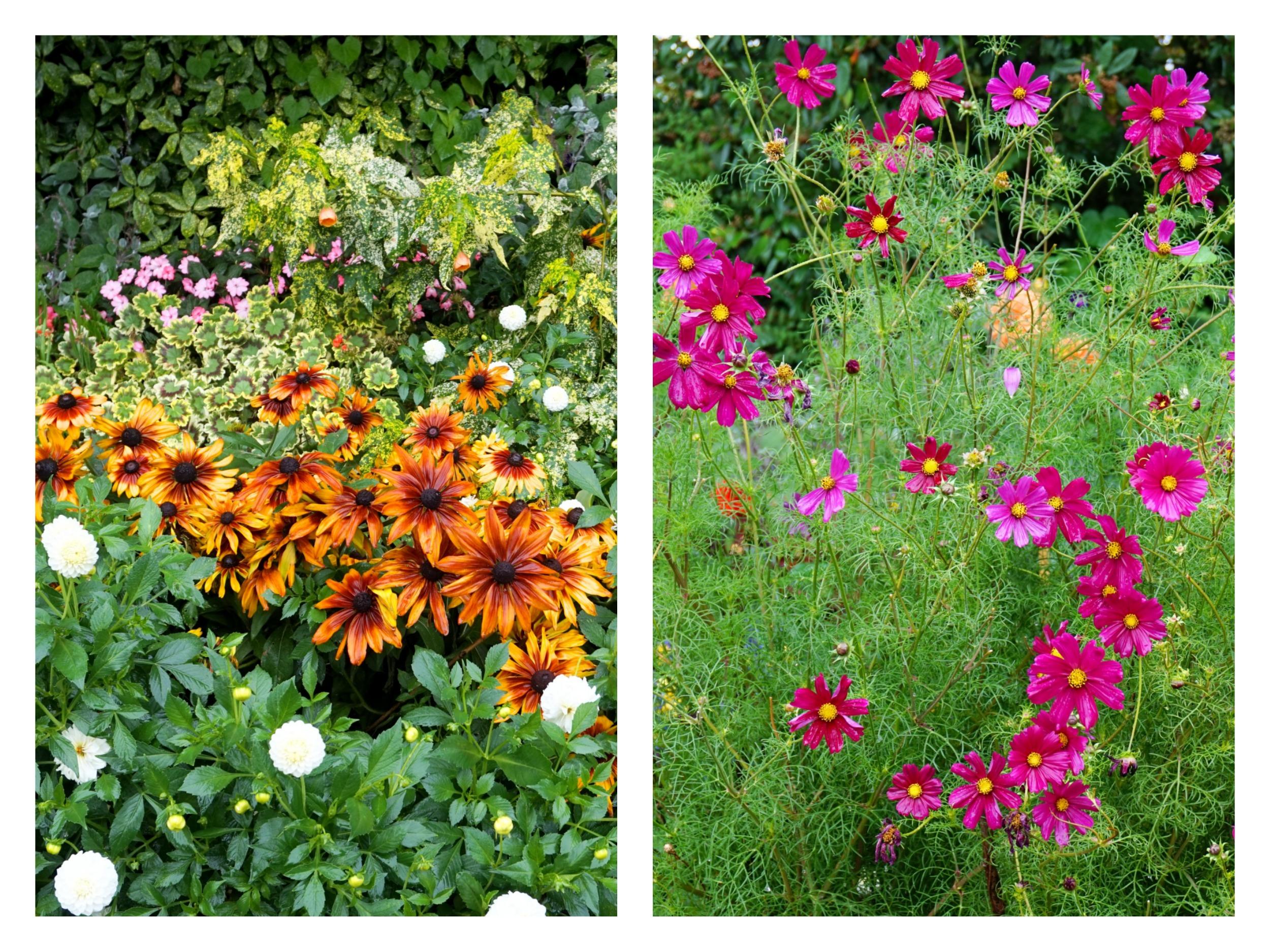 londres-sous-la-pluie-flowers