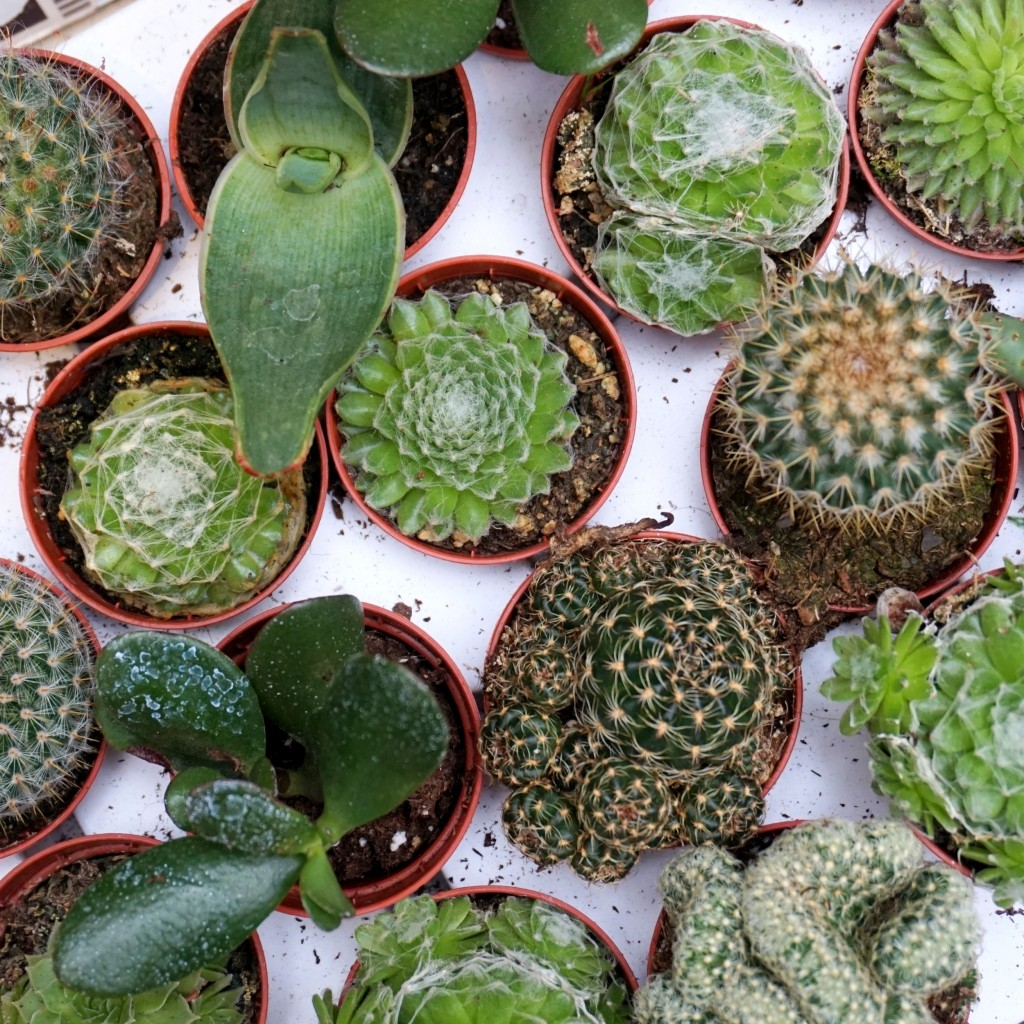 borough-market-cactus