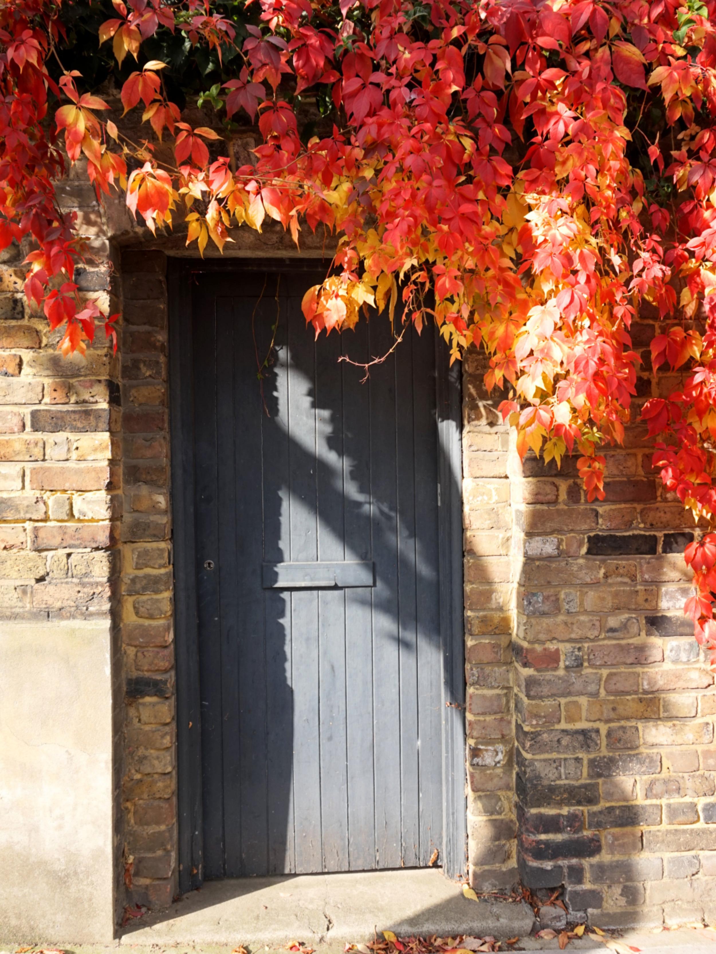 balade-islington-automne-24