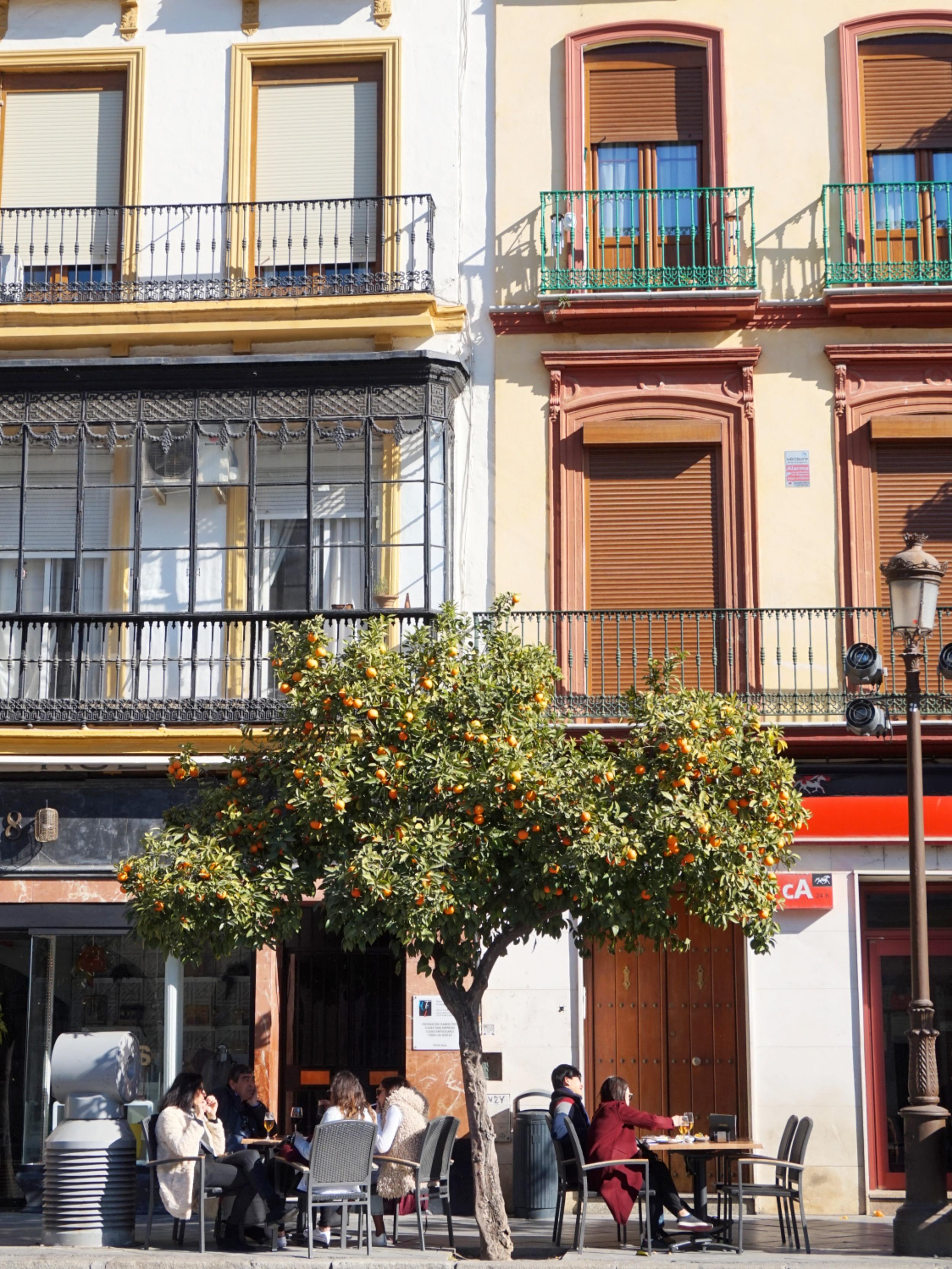 Seville-Janvier-27