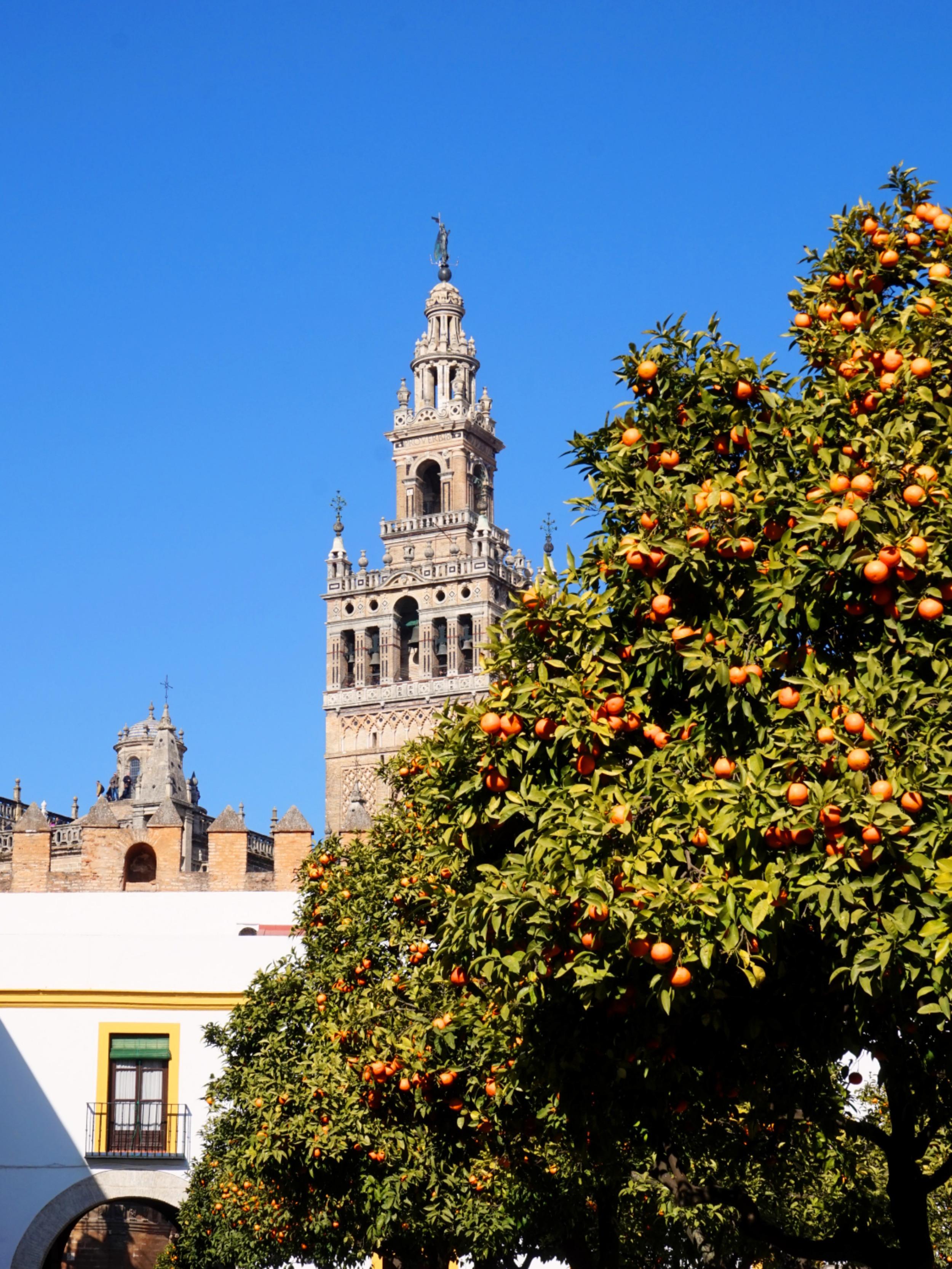 Seville-Janvier-58