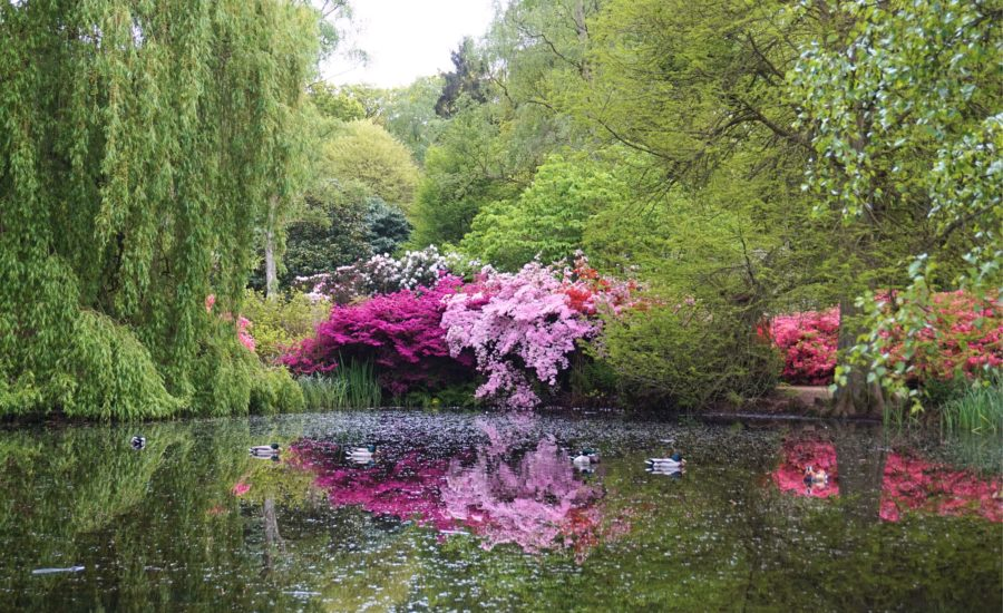 Isabella-Plantation-Londres-13