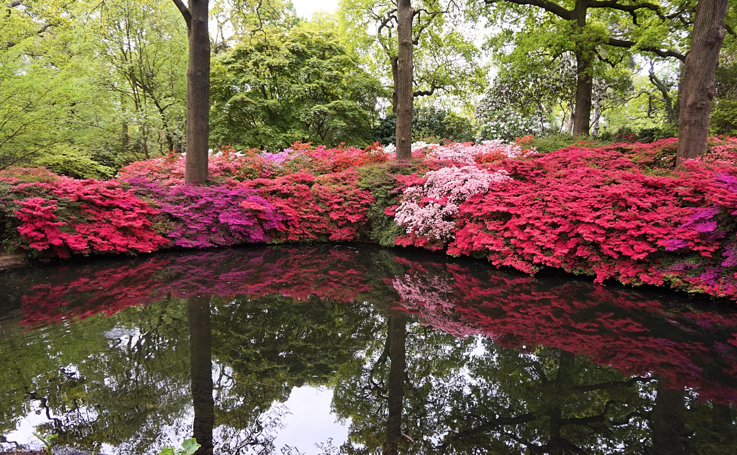 Isabella-Plantation-Londres-19