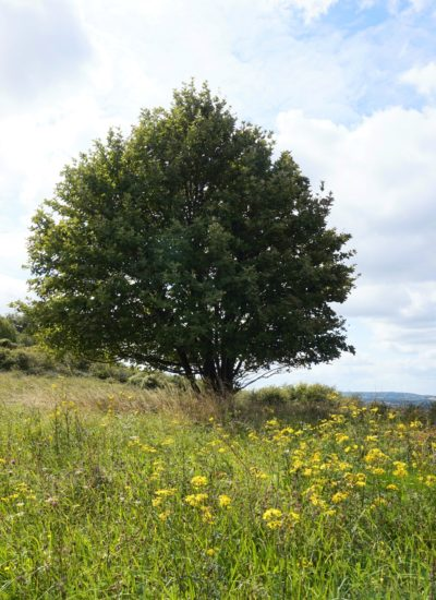Ivinghoe-Beacon-Hike-16