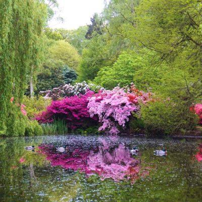 Isabella-Plantation-Londres-13_Fotor