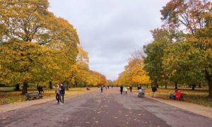 Londres-en-Novembre-7